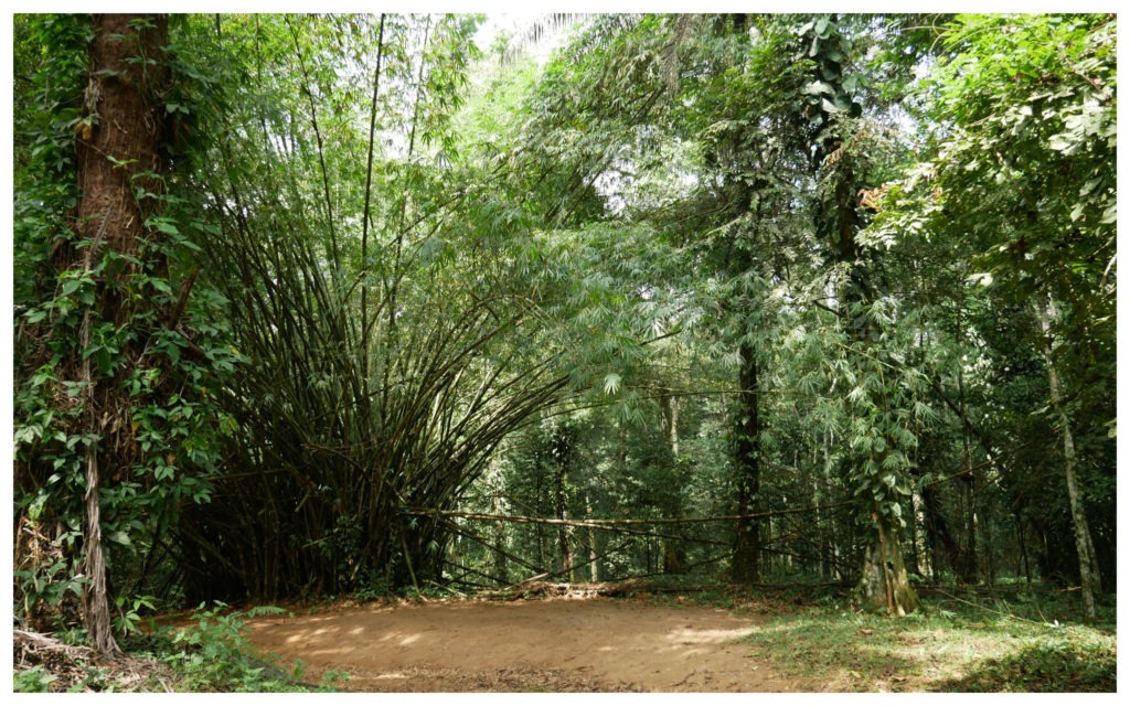 Forêt Banco Abidjan