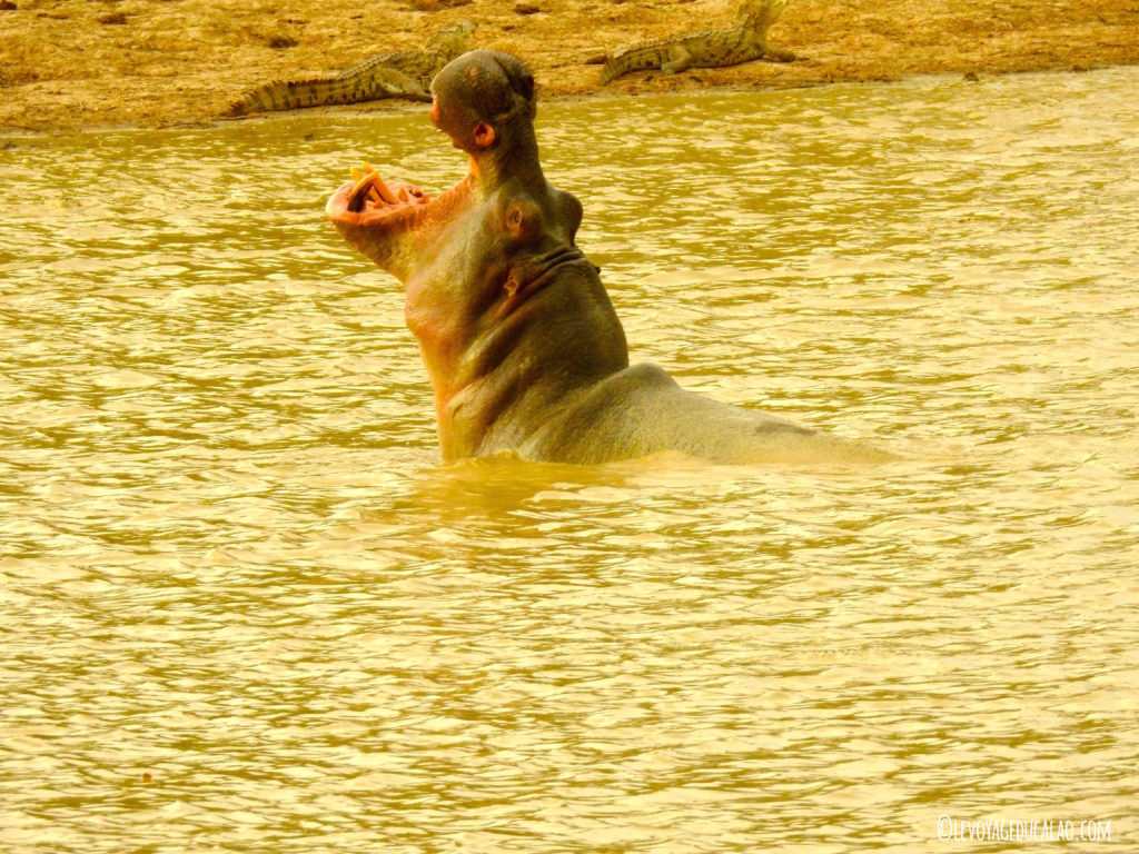 Hippo Pendjari