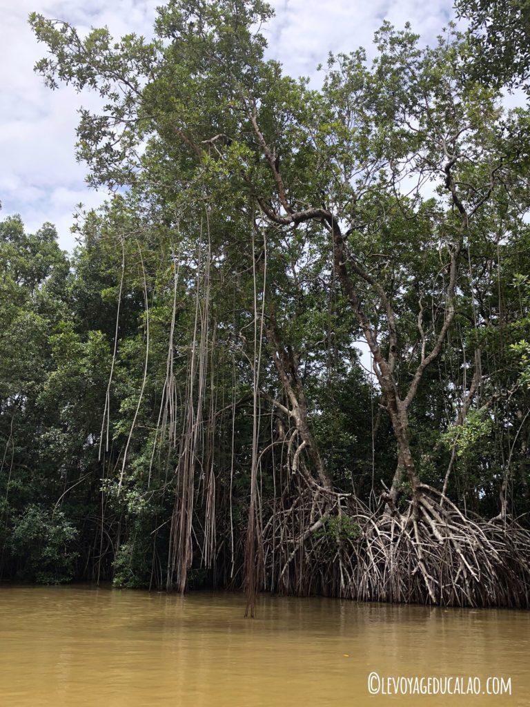 Iles Ehotilé mangrove