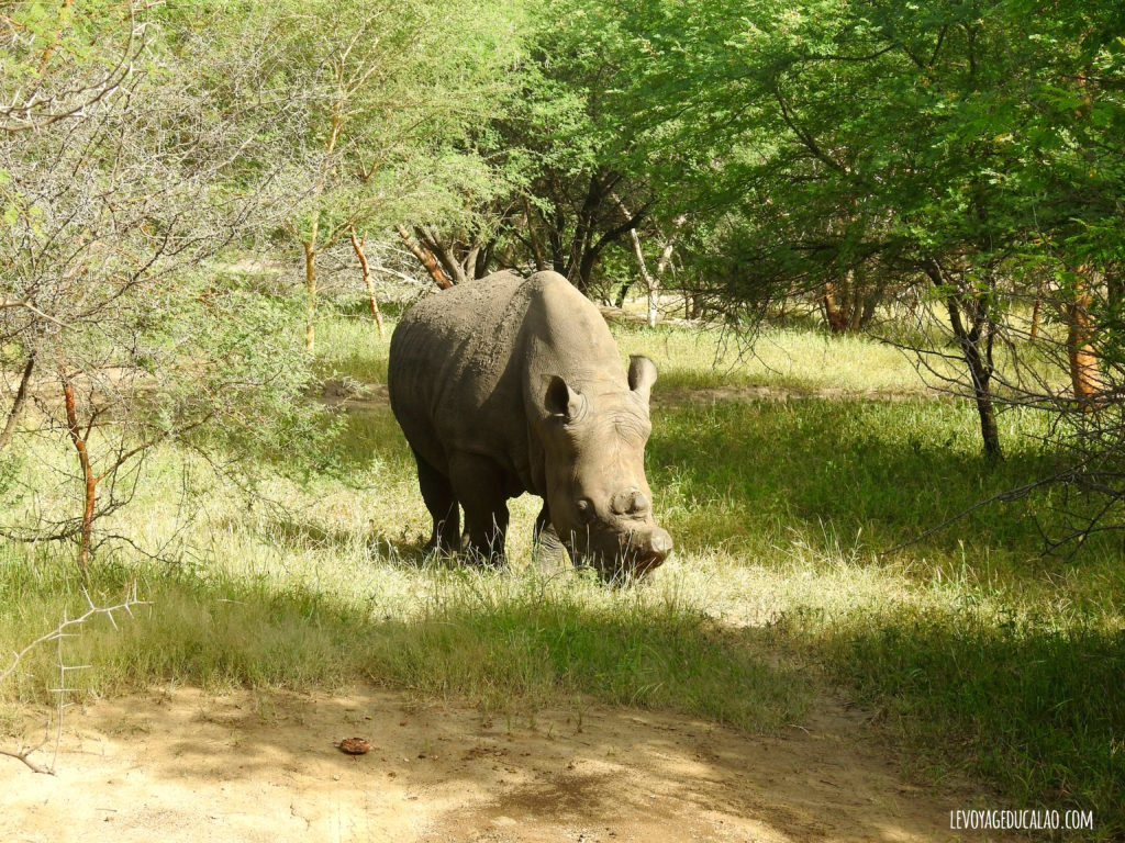 Rhino Bandia Sénégal
