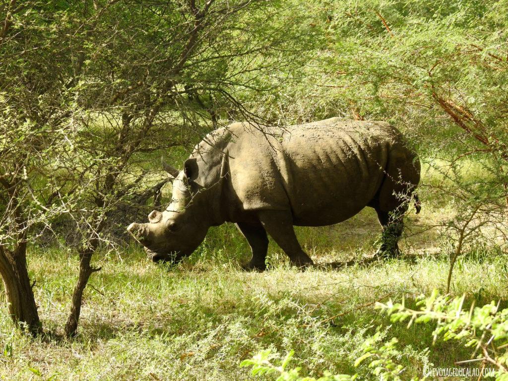 Rhino Bandia Senegal