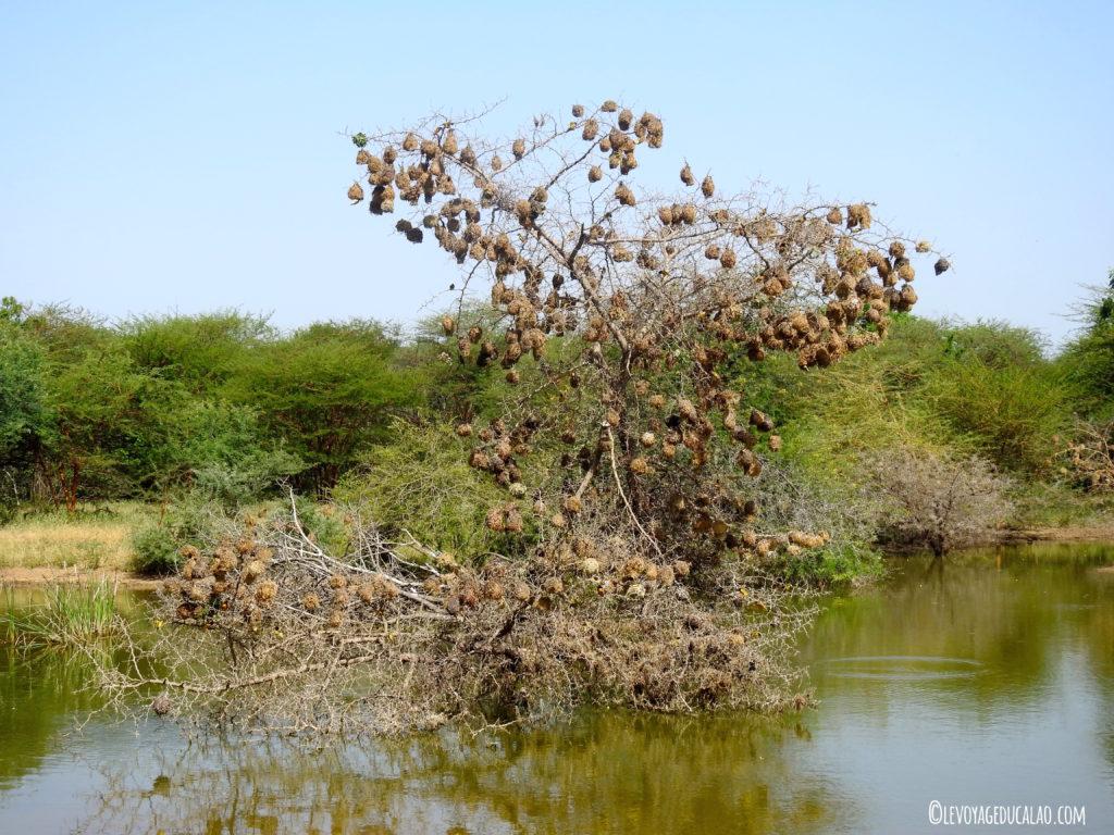 Savane Bandia Senegal
