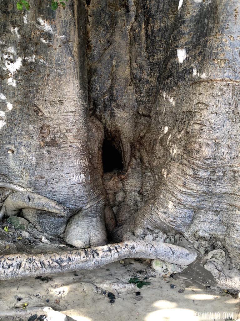Baobab Fadial