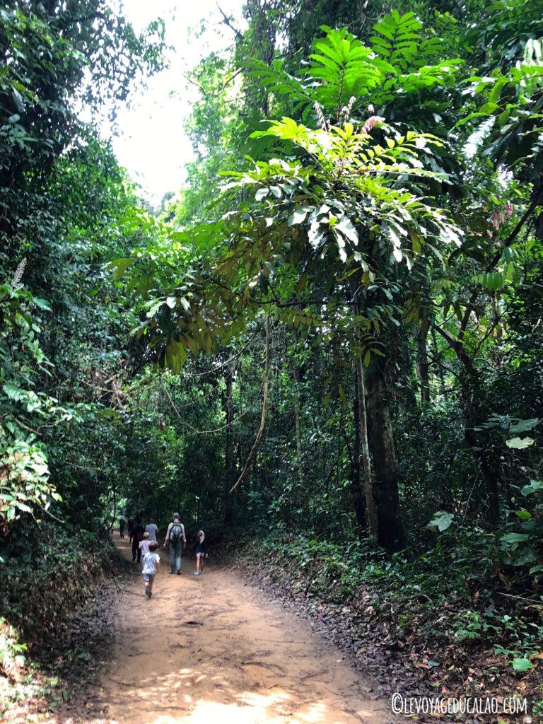 Forêt Banco