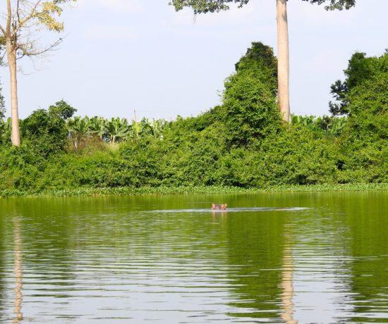 Fleuve Bandama Hippo Tiassalé