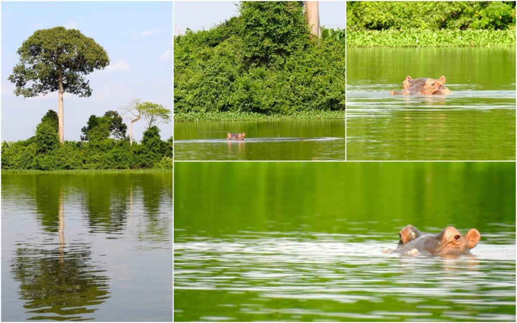 Hippos Tiassalé