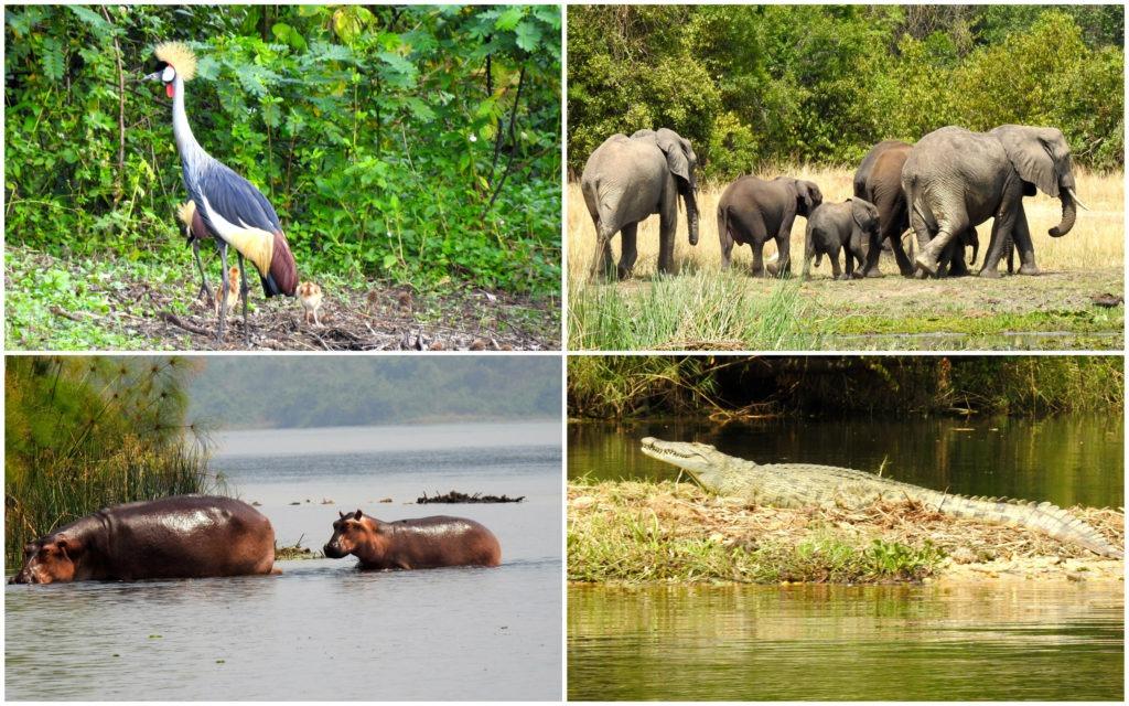Croisière Nil Ouganda