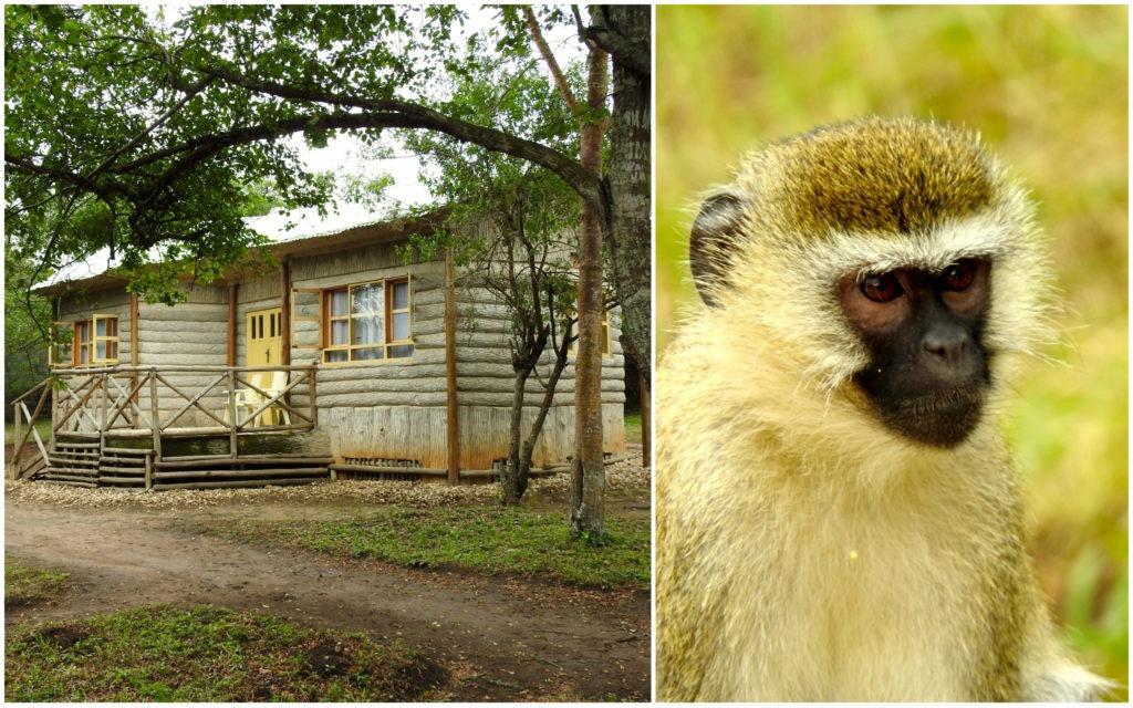 Lodge Lac Mburo Ouganda
