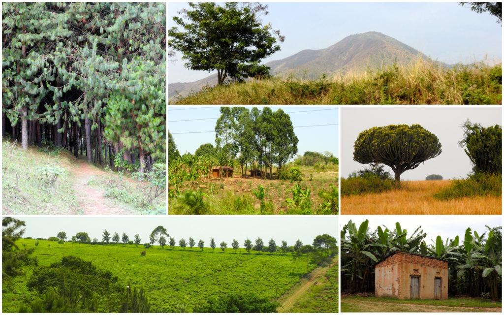 Paysages Ouganda