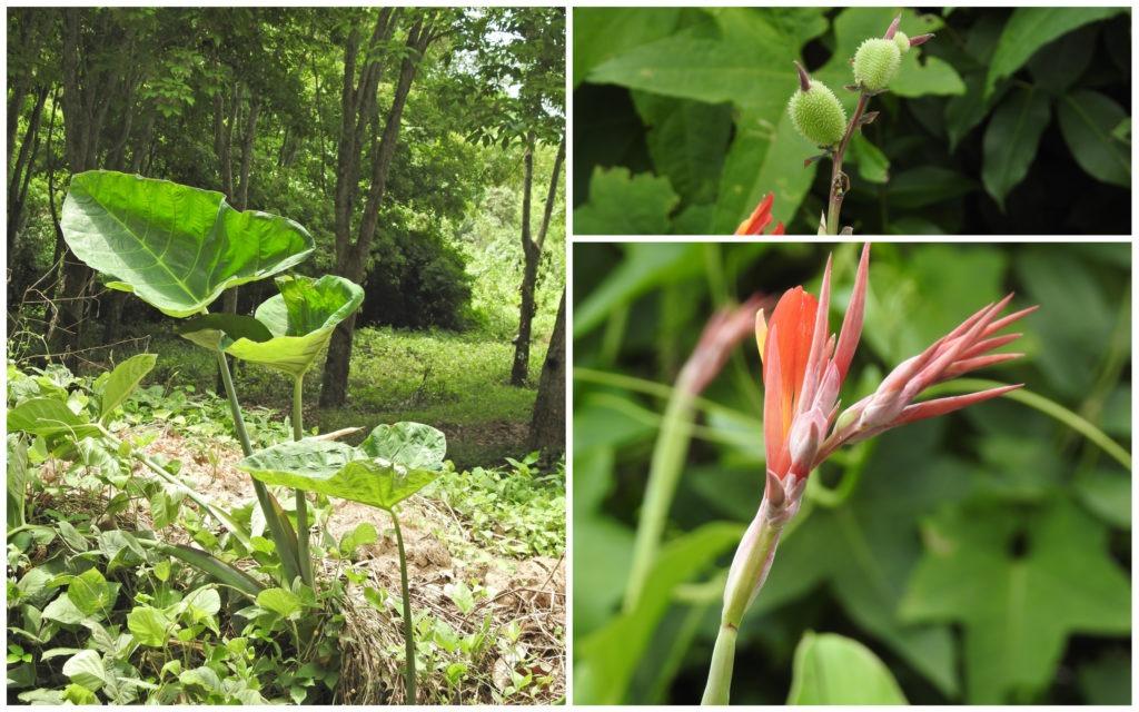 Plantes Bini Abdijan