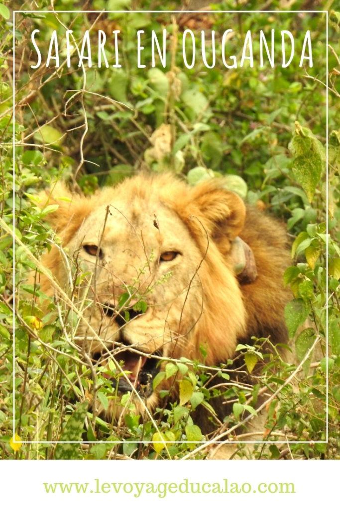 Safari Ouganda Pinterest