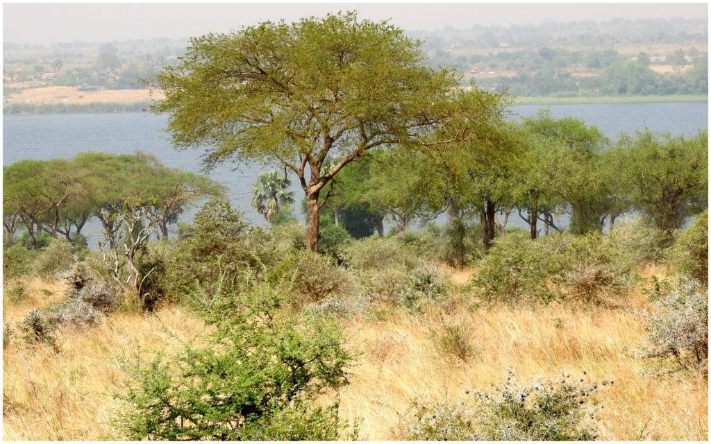 Vue Lodge Murchinson Ouganda