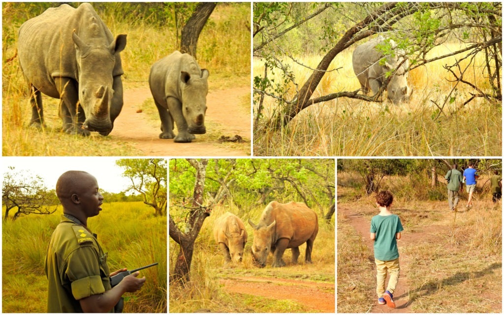Ziwa Rhino Sanctuary Ouganda