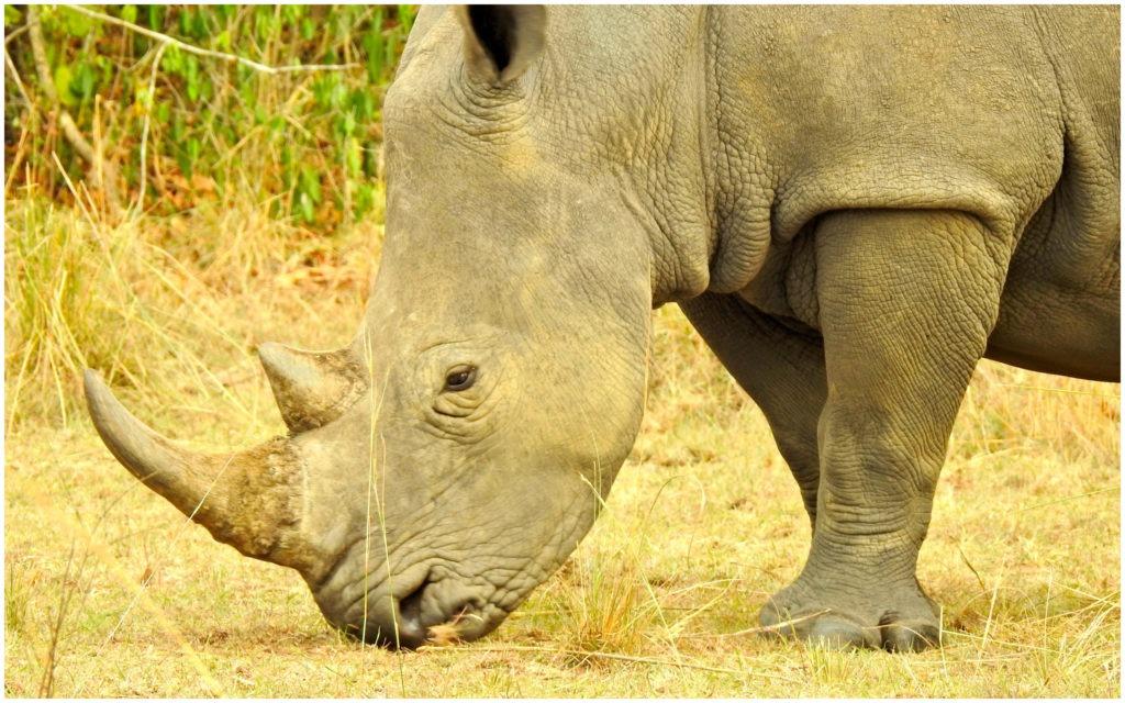 Ziwa Rhino Sanctuary Ouganda 2