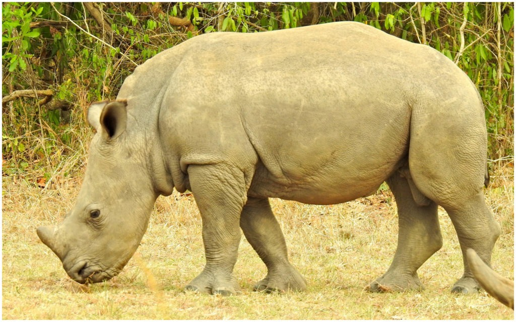 Ziwa Rhino Sanctuary Ouganda 3