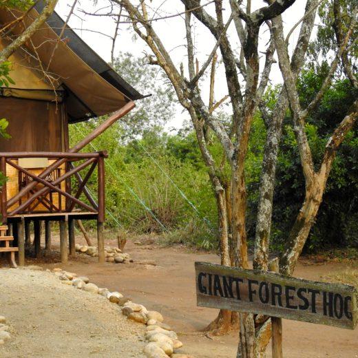 Lodge QE park Ouganda