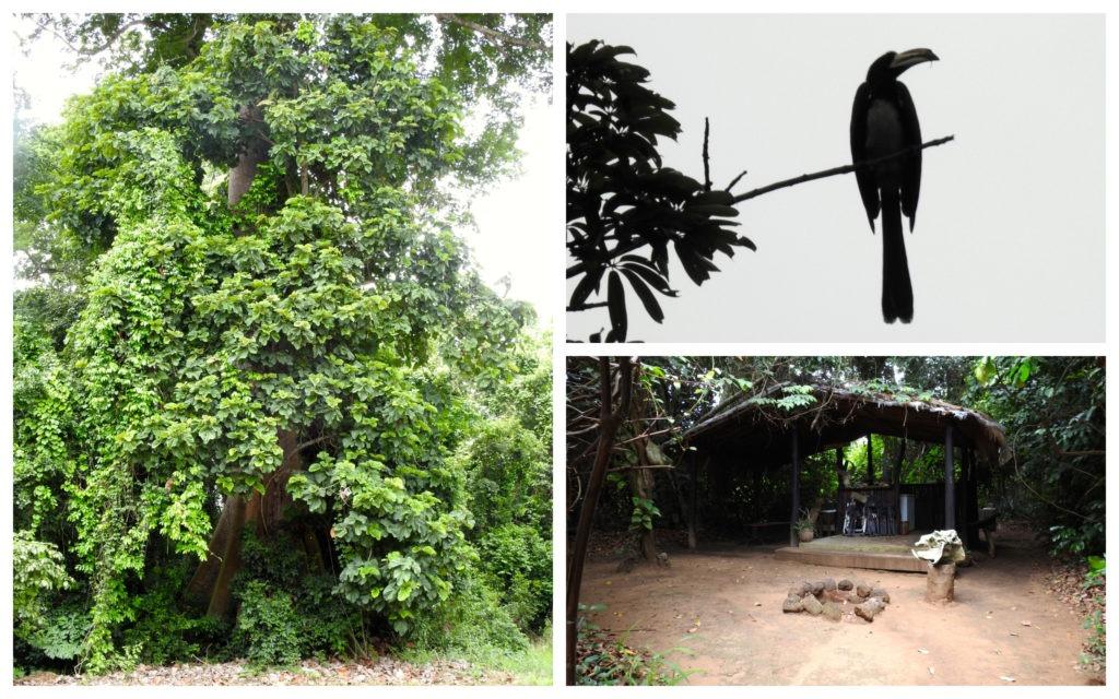 Calao Lodge Nzi Côte d'Ivoire