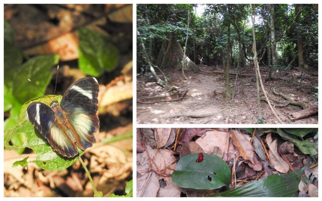 Balade forêt Kakum Ghana