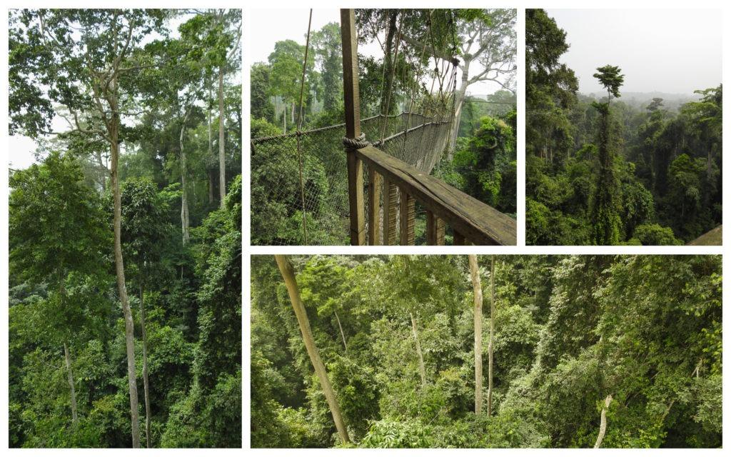 Forêt Kakum Ghana