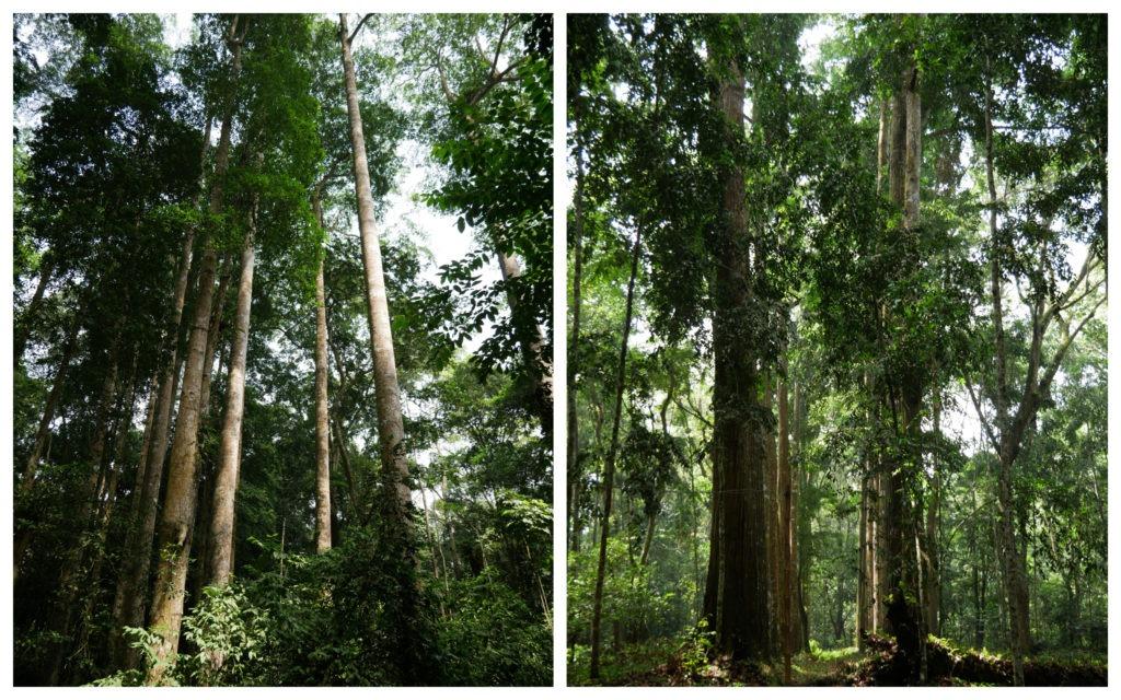 Banco arbres