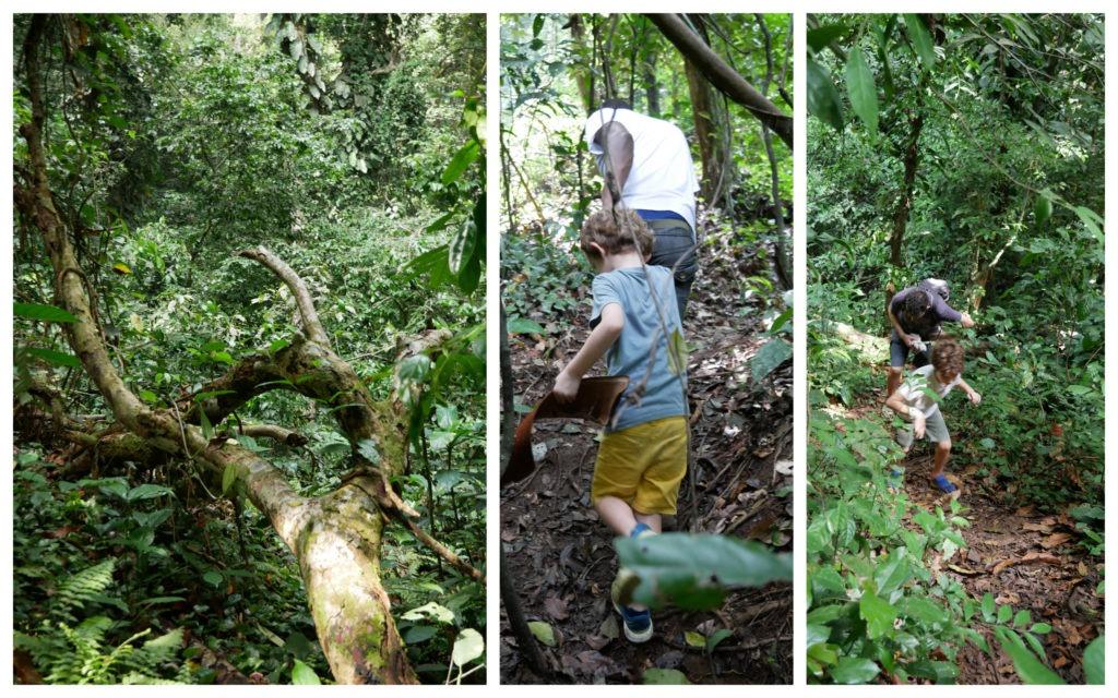 Banco forêt primaire