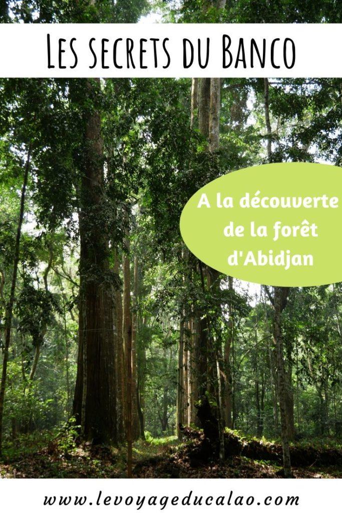 Forêt du Banco Pinterest