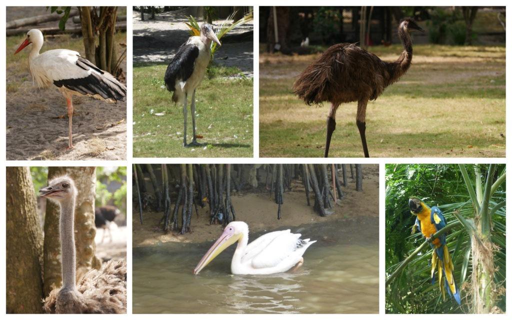 Kafolo lagoon oiseaux
