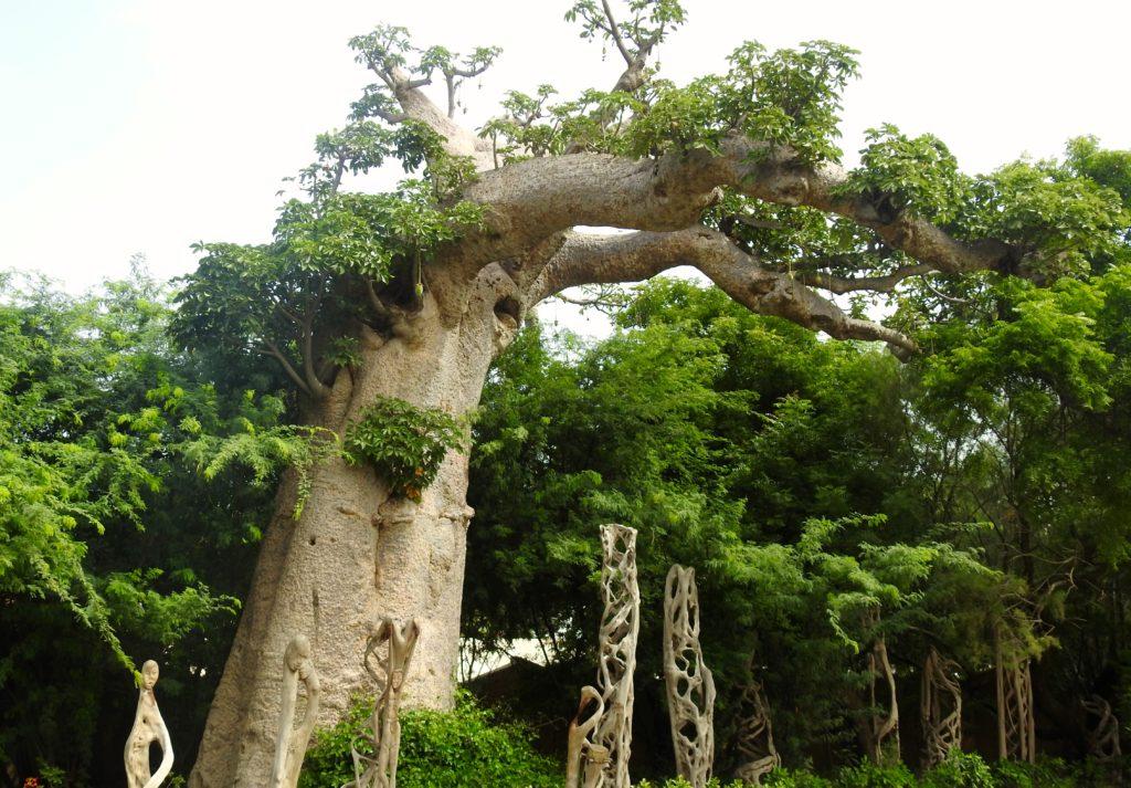 Musée Senghor Dakar Baobab